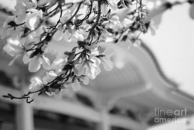 Photograph - Buddhist Temple In Black And White - Spring White Flowers by Beverly Claire Kaiya