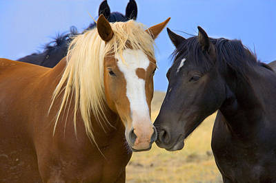 Photograph - Buddies Wild Mustangs by Rich Franco