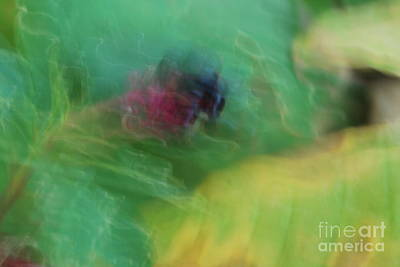 Photograph - Budding Abstract Original Green And Yellow by Heather Kirk