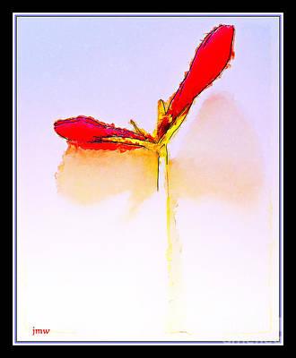 Budding Amaryllis  Art Print by Joseph Welsh