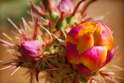 Photograph - Budding Cactus by Fred Larson
