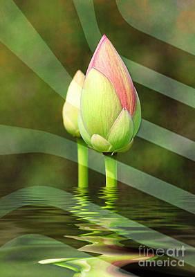 Photograph - Budding Lotus by Kathy Baccari