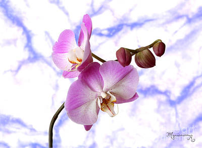Photograph - Budding Orchids by Mariarosa Rockefeller