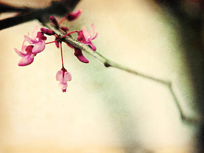 Budding Spring Art Print by Shannon Beck-Coatney