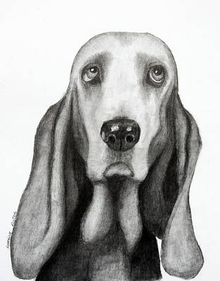 Drawing - Buddy by Lorraine Foster