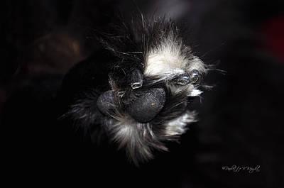 Photograph - Buddys Fluffy Paw by Paulette B Wright