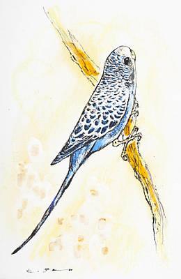 Parakeet Drawing - Budgerigar by Kurt Tessmann