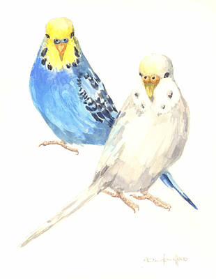 Parakeet Painting - Budgerigar Painting by Alison Fennell
