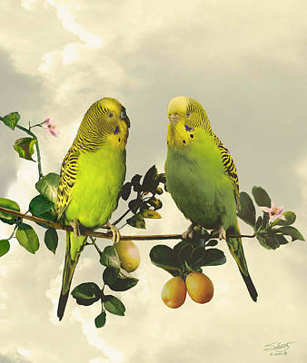 Parakeet Digital Art - Budgerigars In Kumquat Tree by IM Spadecaller