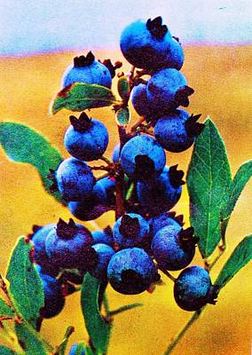 Blueberry Mixed Media - Blueberries Bright by Anne-Elizabeth Whiteway