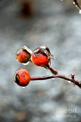 Photograph - Buds On Ice by Bonnie Myszka