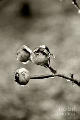 Photograph - Buds On Ice II by Bonnie Myszka