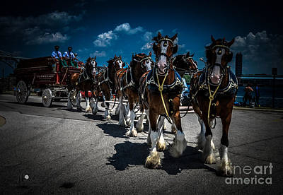 Photograph - Budweiser Clydesdales by Ronald Grogan