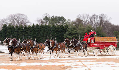Super Bowl Xlviii Photograph - Budweiser Clydesdales by Stacy Abbott