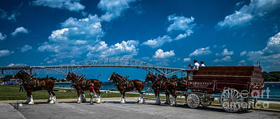Budweiser Clydsdales And Blue Water Bridges Art Print