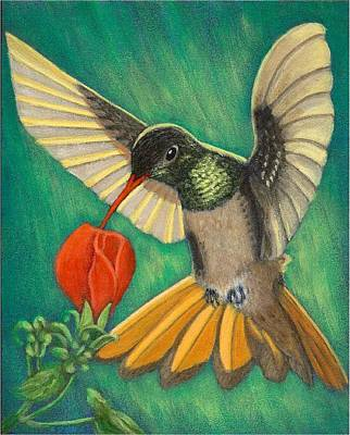 Painting - Buff-bellied Hummingbird by Fran Brooks