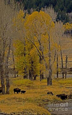 Buffalo   #0436 Original by J L Woody Wooden