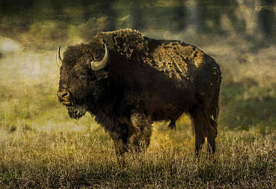 Photograph - Buffalo 2 by Lou  Novick