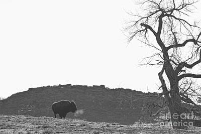 Buffalo Photograph - Buffalo Breath Bw by James BO  Insogna