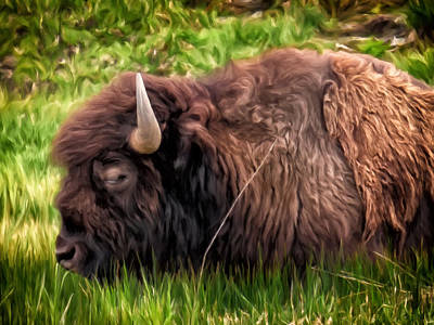 Painting - Buffalo Cat Nap by Michael Pickett