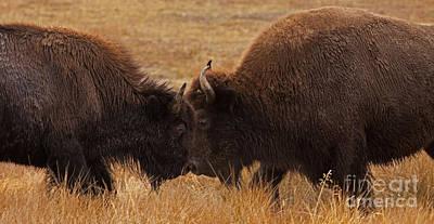 Buffalo Challenge   #4710 Original by J L Woody Wooden