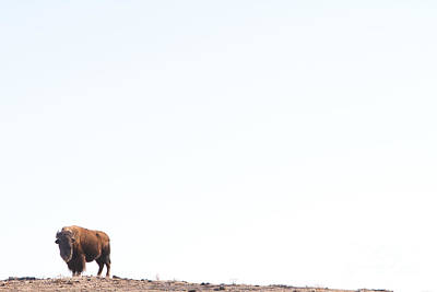 Bison Wall Art - Photograph - Buffalo Country by James BO Insogna
