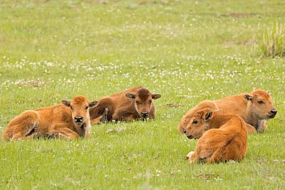 Buffalo Photograph - Buffalo Daycare by Natural Focal Point Photography
