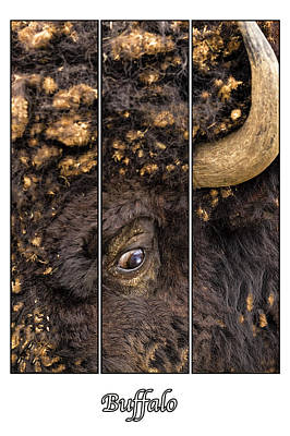 Photograph - Buffalo Eye by Denis Lemay