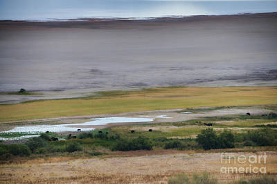 Photograph - Buffalo Herd Of Antelope Island II by Donna Greene
