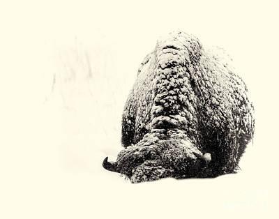 Photograph - Buffalo Hump by Jim Garrison