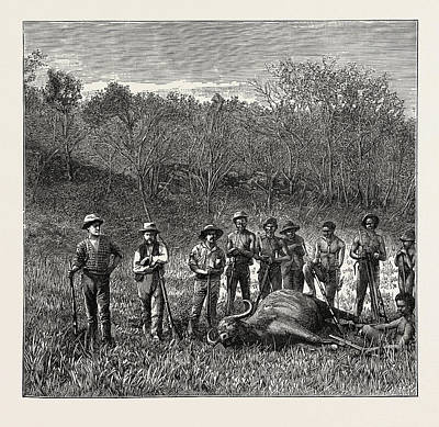 Buffalo Hunters In The Transvaal Art Print by Litz Collection