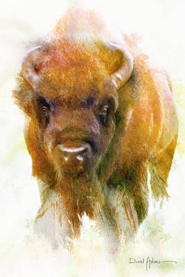 Painting -  Da176 Buffalo II Daniel Adams by Daniel  Adams
