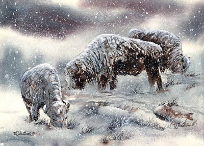Buffalo In Snow Art Print