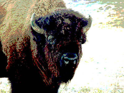 Photograph - Buffalo In Snow by Linda Cox
