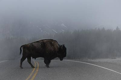 Photograph - Buffalo In The Mist by Nadalyn Larsen