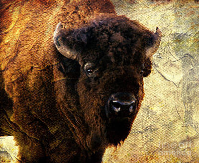 Buffalo Art Print by Linda Cox