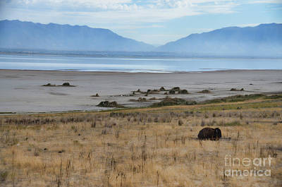 Photograph - Buffalo Of Antelope Island V by Donna Greene