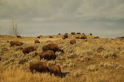 Buffalo On The Prairie Print by Jeff Swan