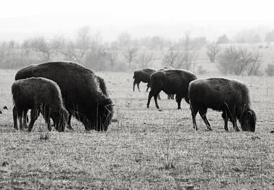 Wall Art - Photograph - Buffalo On The Range by Daniel Kleefeld