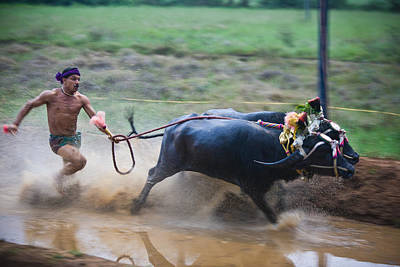 Photograph - Buffalo Race by Nila Newsom