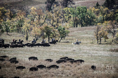 Photograph - Buffalo Roundup 2 by Mary Carol Story