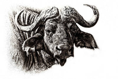 Buffalo Sketch Art Print