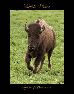 Photograph - Buffalo Symbol Of by Marty Maynard