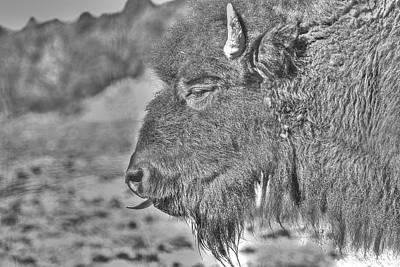Photograph - Buffalo Tongue In Monochrome by SC Heffner