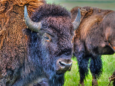 Photograph - Buffalo Warrior by Skye Ryan-Evans