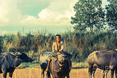 Photograph - Buffalo With Child by Arik S Mintorogo
