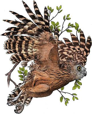 Photograph - Buffy Fish Owl by Roger Hall