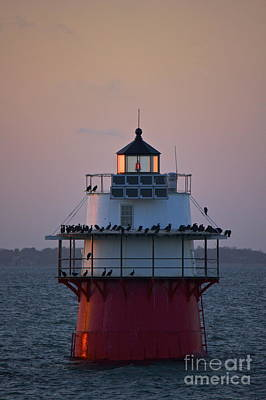 Photograph - Bug Light by Amazing Jules