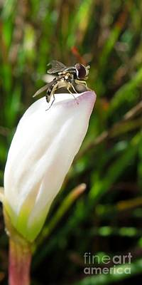 Photograph - Bug On Bud by Renee Trenholm