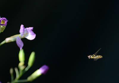 Photograph - Bug Out 2 by Fraida Gutovich